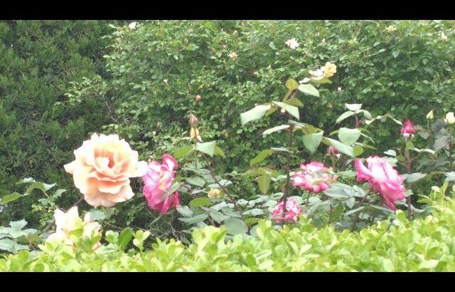 癒し動画 京都市北西 Healing Video Kyoto City Northwest