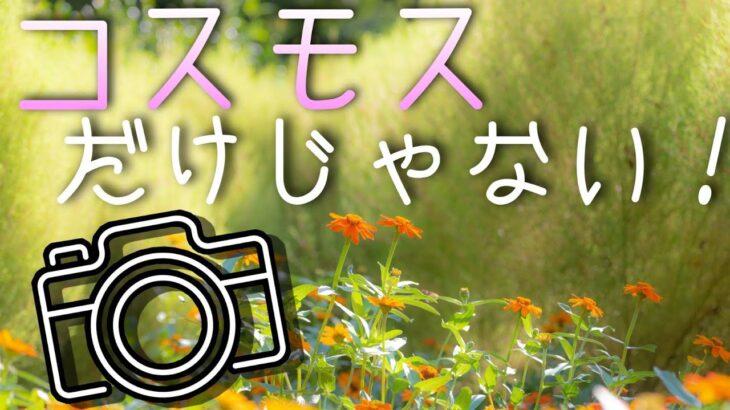 風景写真【秋の花】一眼レフとミラーレスカメラで撮影!